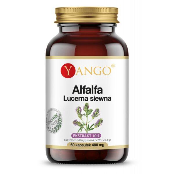 Yango alfalfa lucerna, suplement diety, zielarnia klasztorna